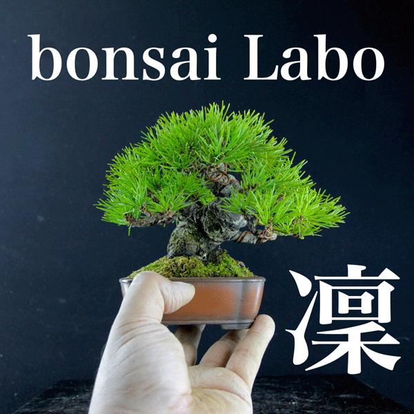 bonsai Labo 凜 ロゴ