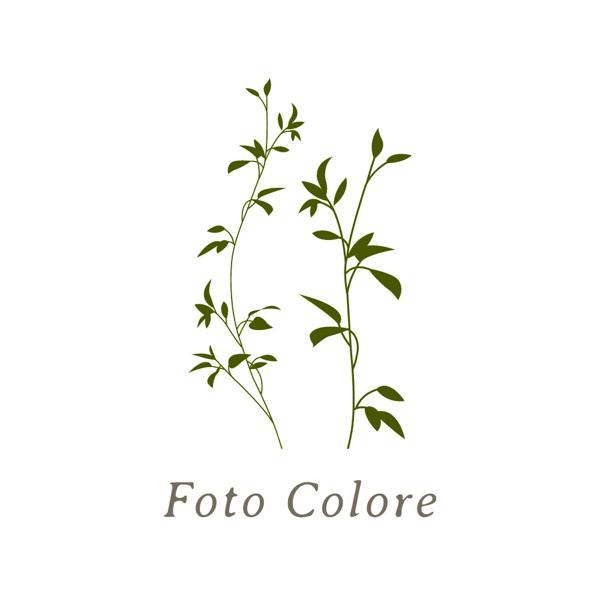 フォトコローレロゴ