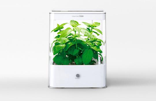 透明なグリーン栽培ケース